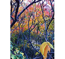 Autumn leaves- Regents Park Photographic Print