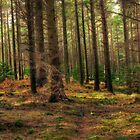 Donard Wood by Przemek Czaicki