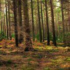 Donard Wood by Przemek Czaicki