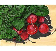 Fresh radish cluster Photographic Print