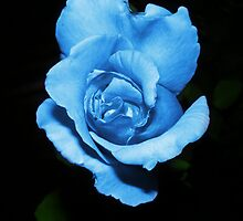 Blue rose in the middle of the night by Sandrrabt