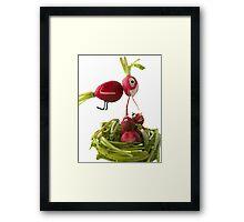 Radish Cardinal Framed Print