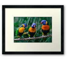 Rainbow Lorikeet IV Framed Print