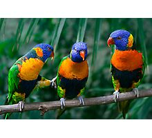 Rainbow Lorikeet IV Photographic Print