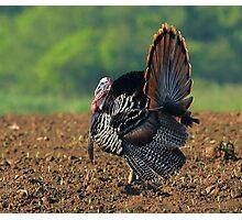 Turkey Photographic Print