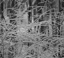 Winter Patterns by Imagery