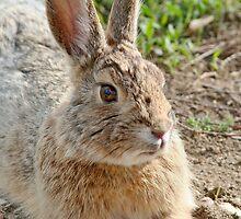 Wild Bunny by AnnDixon