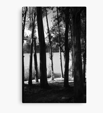 Down to the Lake Canvas Print