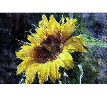 Sunflower Mist Photographic Print