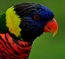 the face of a lorikeet by 1busymom