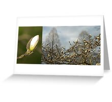 Budding Magnolia diptych Greeting Card