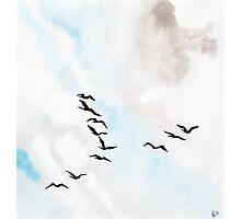 Birds 1 Photographic Print