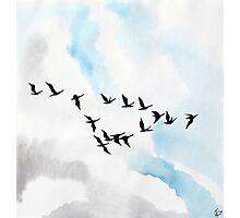 Birds 4 Photographic Print
