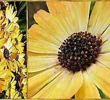 Daisy Diptych by Brenda Boisvert