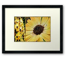 Daisy Diptych Framed Print