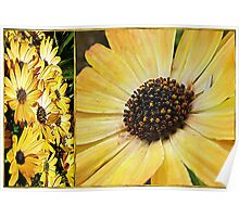 Daisy Diptych Poster