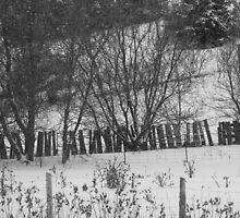 Hillside and Fences- B&W by Tracy Wazny