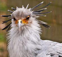 new hair do by Grandalf