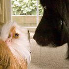 """""""Nose To Nose"""" - dog and guinea pig check out each other by ArtThatSmiles"""