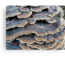 TURKEYTAILS 1 Canvas Print