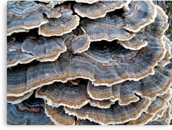 TURKEYTAILS 1 by May Lattanzio