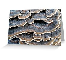TURKEYTAILS 1 Greeting Card