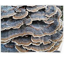 TURKEYTAILS 1 Poster