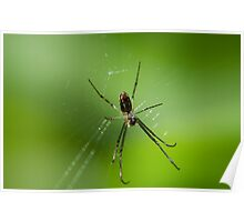 Baby spider Poster
