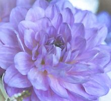 Purple Dahlia by Anita Pollak