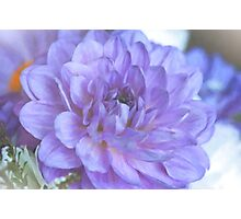 Purple Dahlia Photographic Print