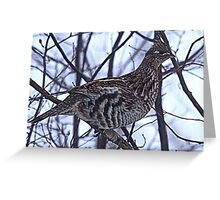 And A Partridge in a Elm Tree Greeting Card