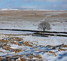 Frosty Walk near Malham by Kat Simmons