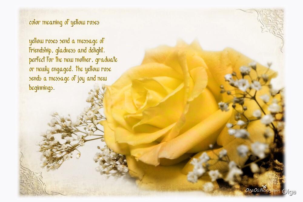 Yellow rose by Olga
