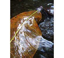 Rippling Leaf Photographic Print