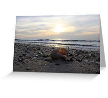 Lonley seashell Greeting Card