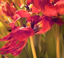 tulip fire:) by LisaBeth