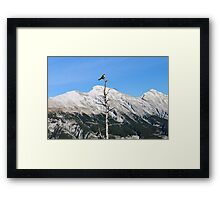 Banff Bird Framed Print