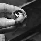 Chocolate covered cherry in black and white by mltrue