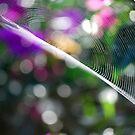Spiderweb by Jennifer Eurell