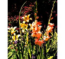 Chicago Botanic Garden series 2 Photographic Print