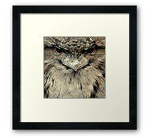 Tawny Frogmouth Framed Print
