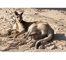 Kangaroo on the golf course Photographic Print