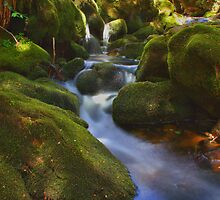 Mossy Creek by Patrick Reid