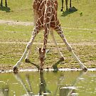 """""""Everybody's Got Challenges"""" - Giraffe struggles for a drink by John Hartung"""