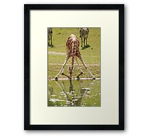 """Everybody's Got Challenges"" - Giraffe struggles for a drink Framed Print"