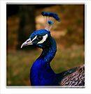 Pretty in Blue  by lynell