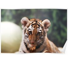 Tiger Cub - Milwaukee County Zoo Poster