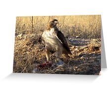 Red-tailed Hawk ~ Dinner for One Greeting Card