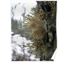 Lichen treehugger Poster
