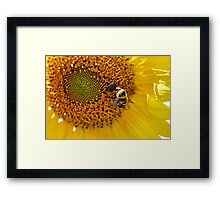 Get Out Of Here Beetle! Framed Print